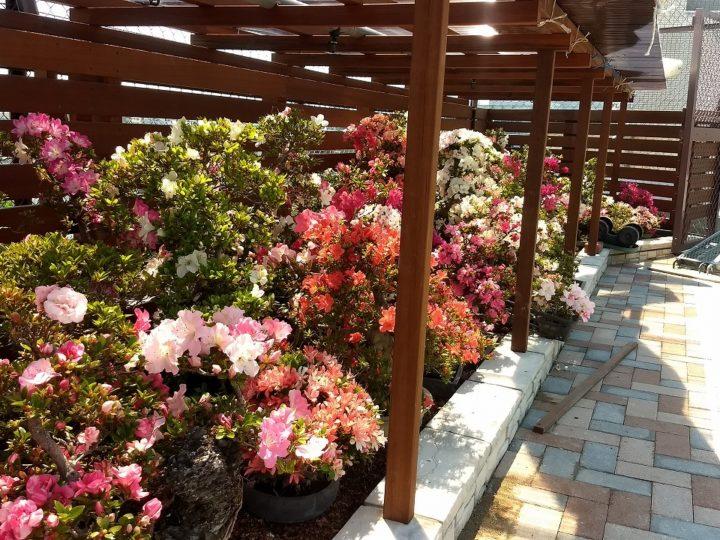 東京都北区 N様邸 屋上庭園工事